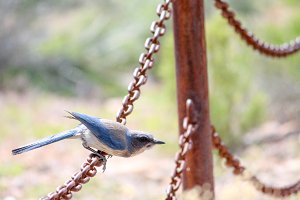 Blue Bird Preparing For Flight