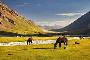 Horses in the mountain valley