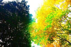 Autumn park trees illustration backg