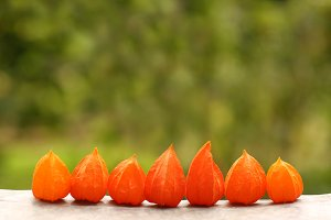 physalis fruits in row with copyspac