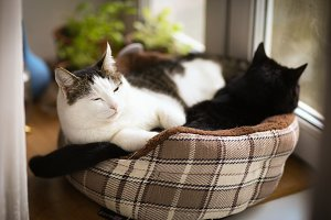 two cute tom mail cat couple sleepin