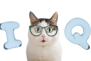 iq letters and funny cat in glasses