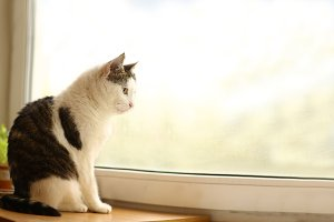 mail tom cat sit on windowsill look