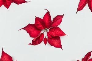 Christmas poinsettia flowers pattern