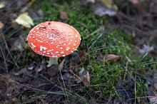 Poisonous red toadstool by  in Nature