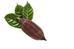 Cocoa pod with Cocoa leaf