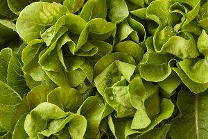 fresh salad butter lettuce