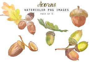Watercolor acorns clipart