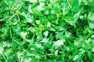Parsley- Healing Herbs