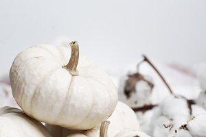 White Pumpkin Styled Image