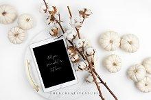 White Pumpkins, Cotton & iPad Mockup