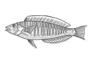 Ink sketch of fish