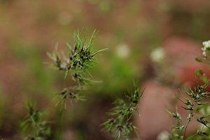 Wild flower close-up.