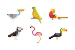 Birds set, toucan, pelican