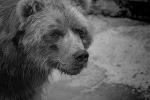 Animals Black & White