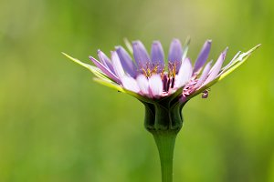 Wild pink flower.