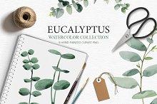 Eucalyptus collection