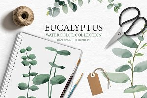 Eucalyptus collection