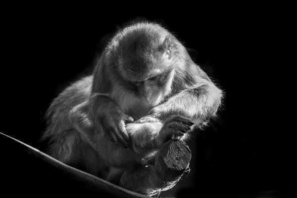 Animal Stock Photos: J&M Diversity - Animals Black & White