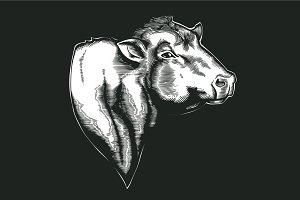 Head of bull of dangus breed