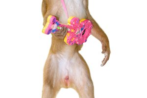 Monkey playing guitar plastic