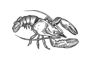Lobster sea animal engraving vector