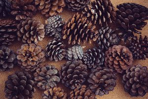 Pine tree cone background.