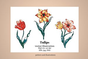 Tulips-Vector Floral Clip Art