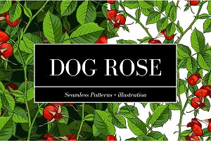 Dogrose Patterns + Illustration