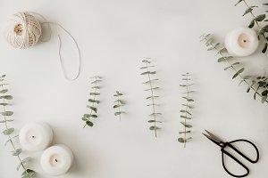 Baby blue eucalyptus branches