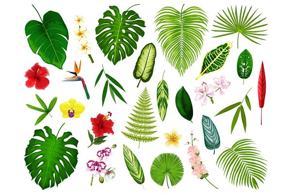 Tropical plants and flowers leaves