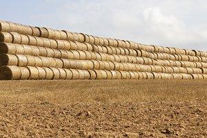 cylindrical rolls of straw