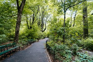 Footpath surrounded by trees in