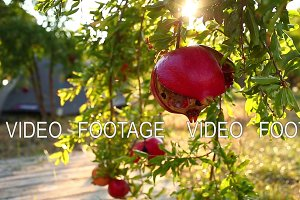 ripe cracked pomegranates on the