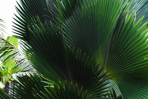 Palm tree closeup.