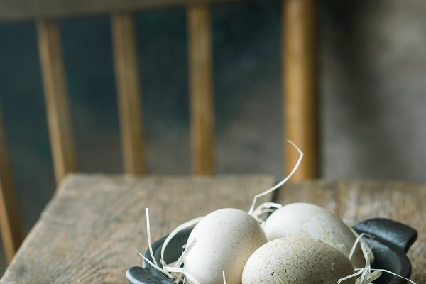 Food Stock Photos - Turkey eggs in a bowl