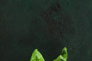 top view of fresh green basil leaves