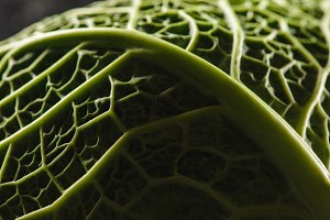 texture of green fresh savoy cabbage