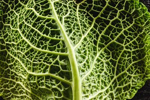 close-up view of fresh  green leaf o