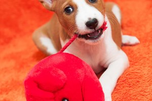 red puppy dog with plush toy mouse