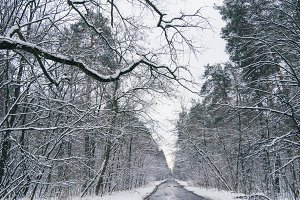 concrete road in snowy winter forest