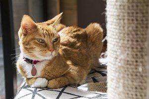 Calm cat, on his scraper bed