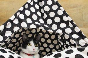 Cat inside his pet house.