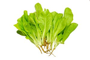 Green lettuce isolated on white.