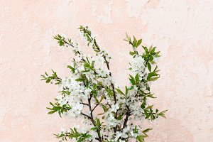 Bouquet of apple branches