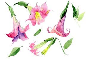 Pink brugmansia PNG watercolor set