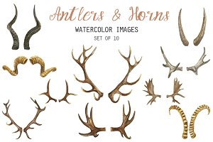 Watercolor Antlers & Horns Clipart