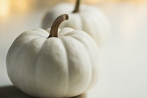 White pumpkin, fall background
