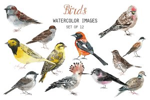 Watercolor birds clipart