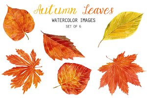 Watercolor Autumn Leaves Clipart